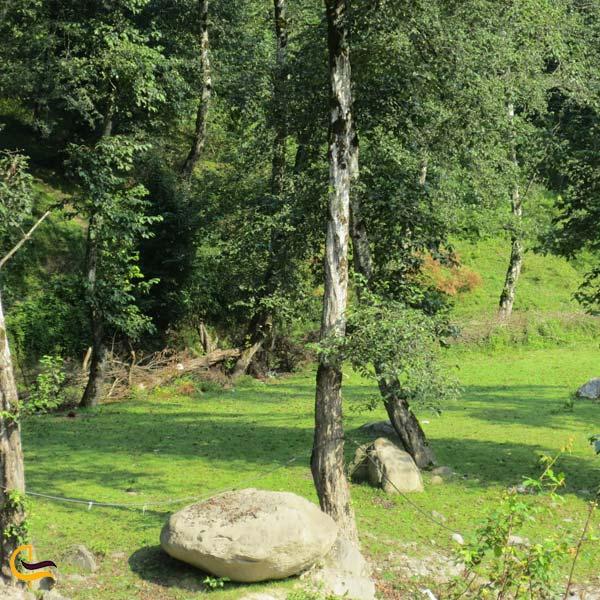 تصویری از طبیعت جنگل بندپی
