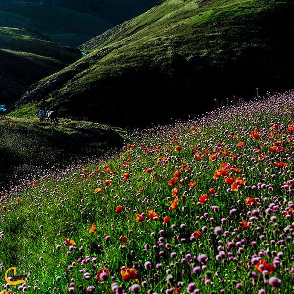 تصویری از پوشش گیاهی در طبیعت خلخال