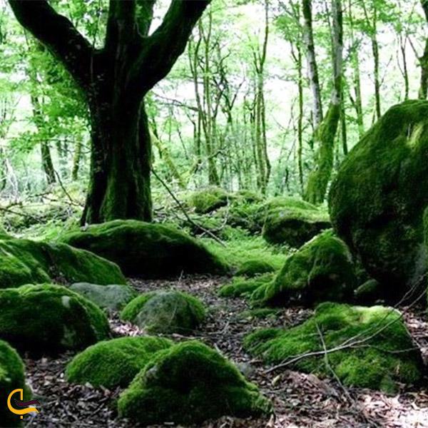 نمایی از گونه های گیاهی پارک جنگلی خشکه داران