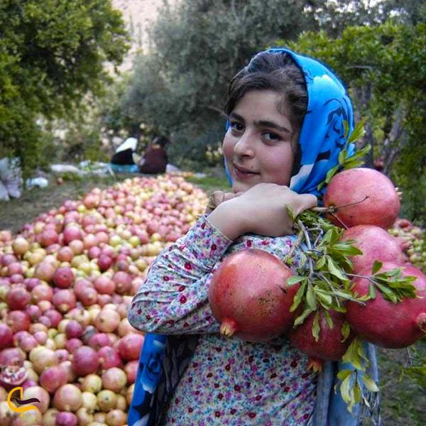 برگزاری جشن انار در قزوین