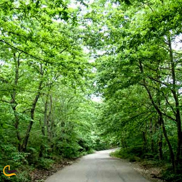 تصویری از جاده جنگلی فومن سراوان