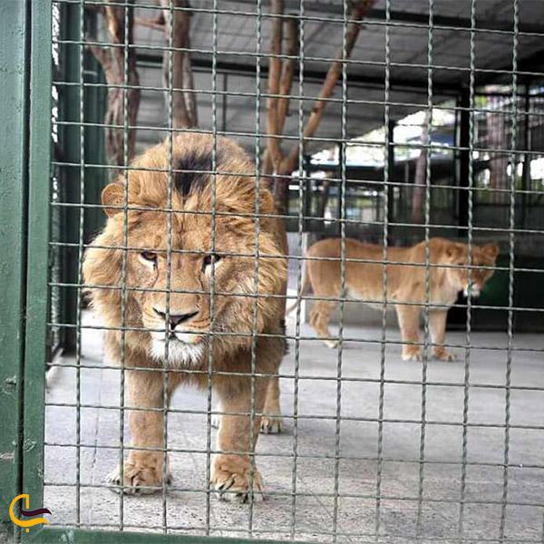 نمایی از باغ وحش وکیل آباد