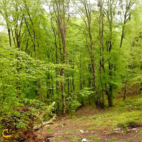 تصویری از جنگل سرسبز رزکه آمل