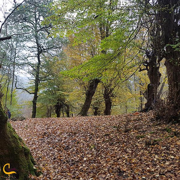 تصویری از جنگل سد لفور سواد کوه