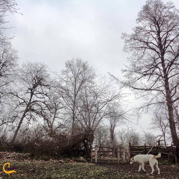 نمایی از جنگل سد لفور مازندران