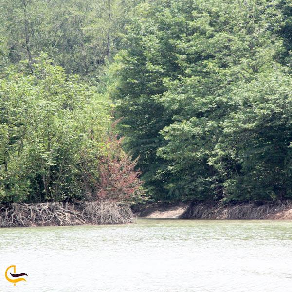 تصویری از سنبل رود مازندران