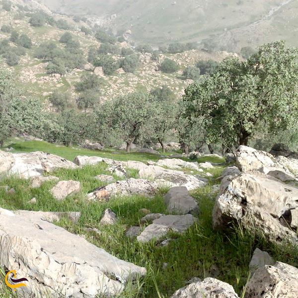 نمایی از منطقه حفاظی شده خامین گچساران