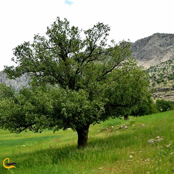 طبیعت زیبای جنگل زاگرس در مجاورت آبشار زرد لیمه