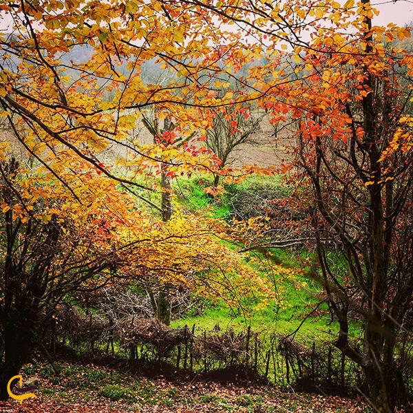 تصویر زیبا از پارک جنگلی بابلکنار در فصل پاییز