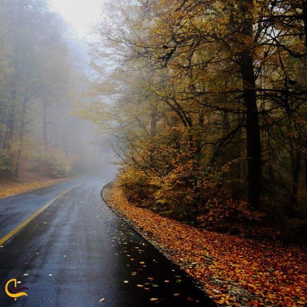 تصویری از جاده جنگلی دامغان و گلوگاه