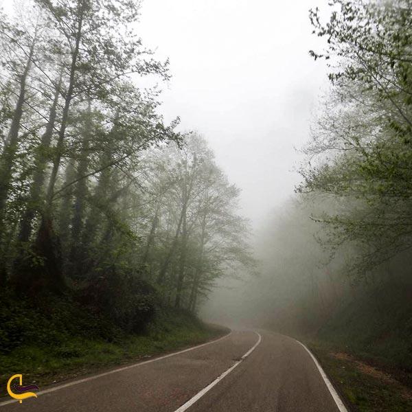 نمایی از مه در جاده جنگلی گلوگاه
