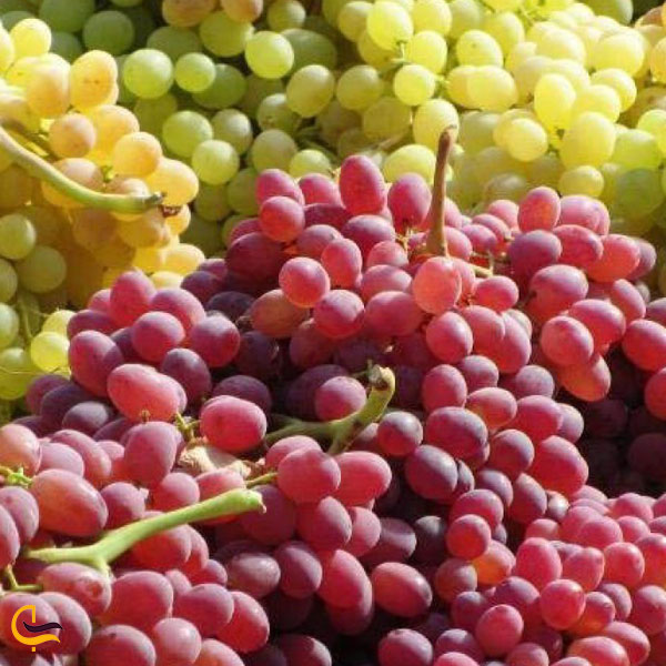 تصویری از انگور سوغات سی سخت
