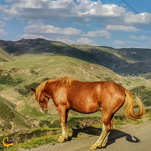 تصویری اسب در کنار جاده اسالم به خلخال