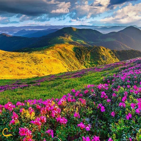 نمایی از طبیعت سرسبز کوه گل