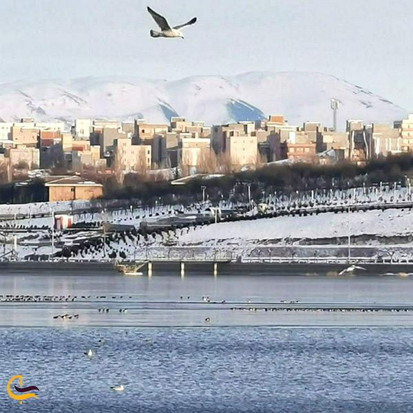 پرندگان مهاجر دریاچه شورابیل