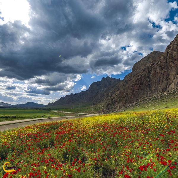 تصویری از طبیعت تالاب هشیلان کرمانشاه