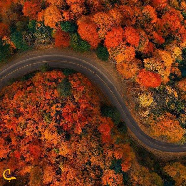 تصویری از جاده جنگلی پاییزی اسالم به خلخال