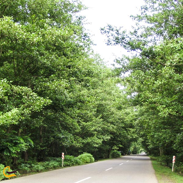نمایی از جاده جنگلی اسالم به خلخال