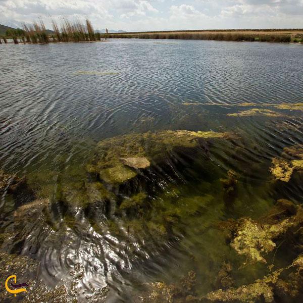 تصویری از پوشش گیاهی تالاب هشیلان