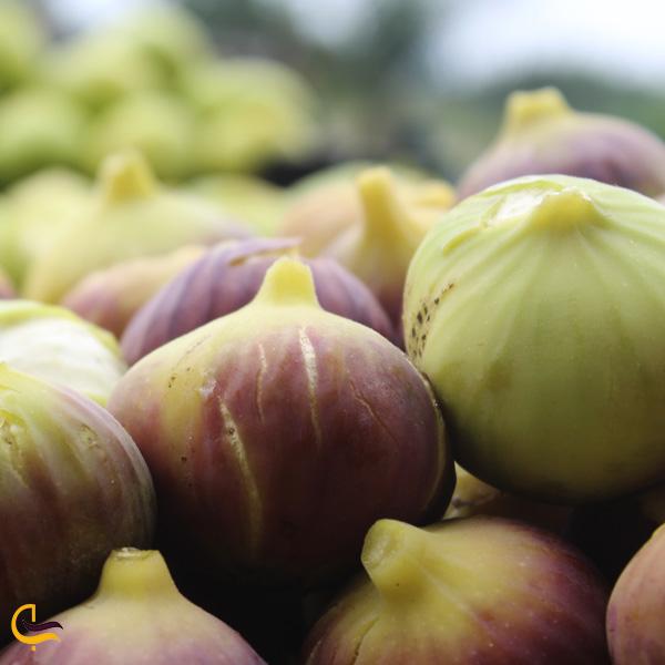 تصویری از سوغات انجیر گلوگاه