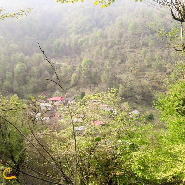تصویری از منطقه جنگلی طاسکو