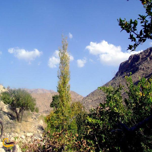 تصویری از طبیعت بکر روستای نوایگان