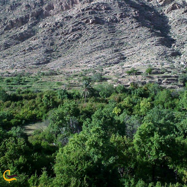 تصویری از روستای نوایگان داراب