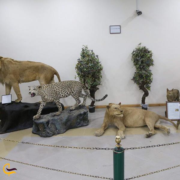 بازدید از موزه حیات وحش اردبیل