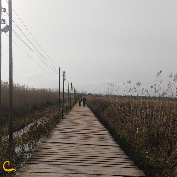 تصویری از پل چوبی کیا شهر