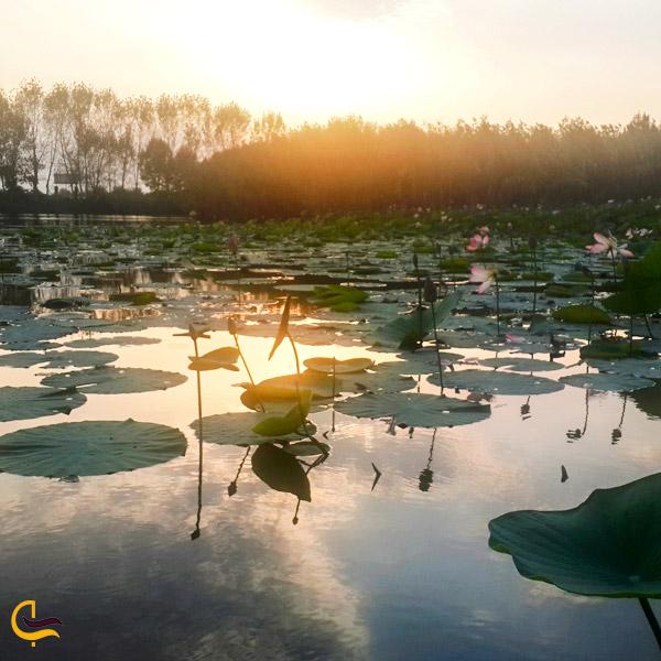 تصویری از آب پارک ساحلی نیلوفر آبی ساری