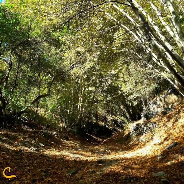 تصویری از طبیعت روستای اردمه