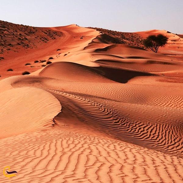 تصویر زیبا از صحرا واهب عمان