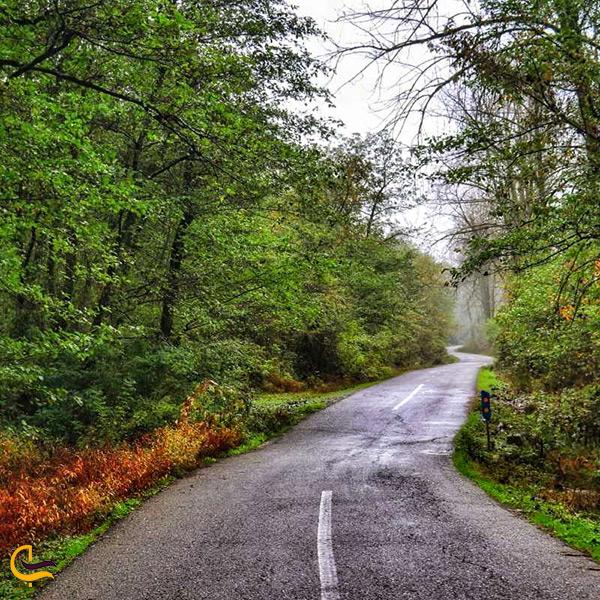 جاده زیبا در پارک جنگلی گیسوم تالش
