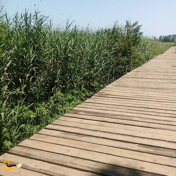 نمای نزدیک پل چوبی کیاشهر