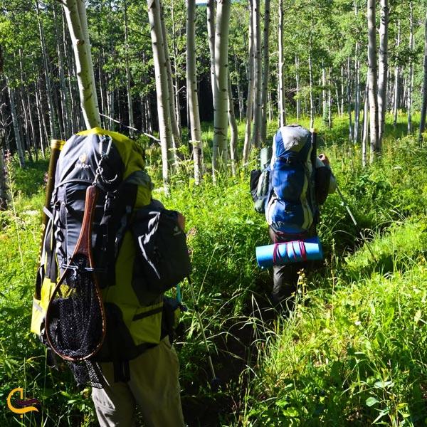 تصویری از جنگل نوردی در جنگل دالخانی