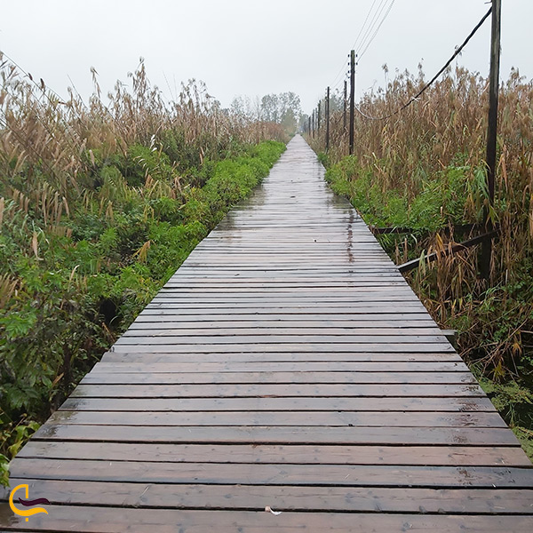 تاریخچه ساخت پل چوبی کیاشهر