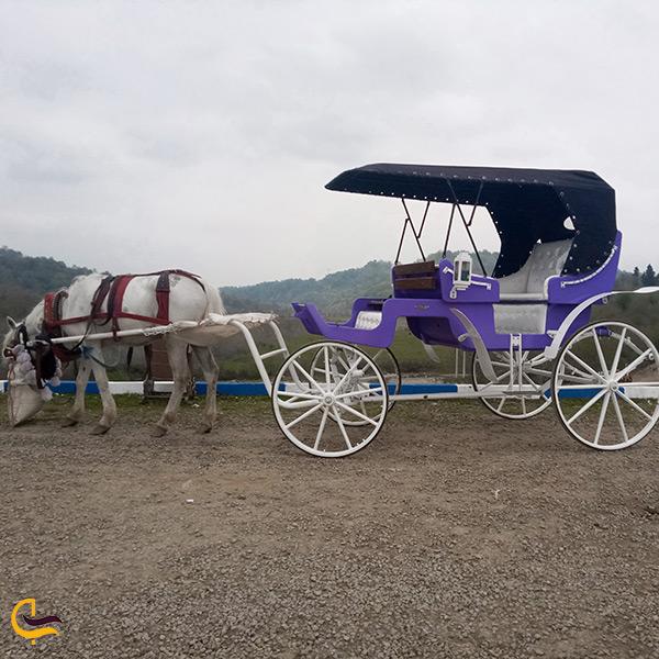 اسب سواری و کالسکه سواری در سد شیاده