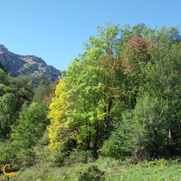 تصویری از جنگل فینسک