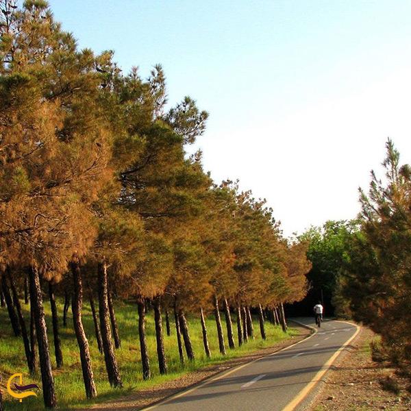 تصویر پارک جنگلی چیتگر