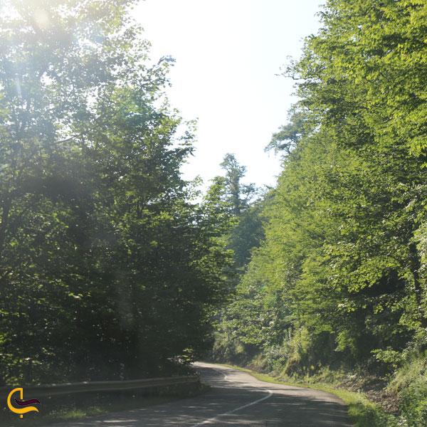 تصویری از طبیعت سرسبز جاده جنگل دالخانی