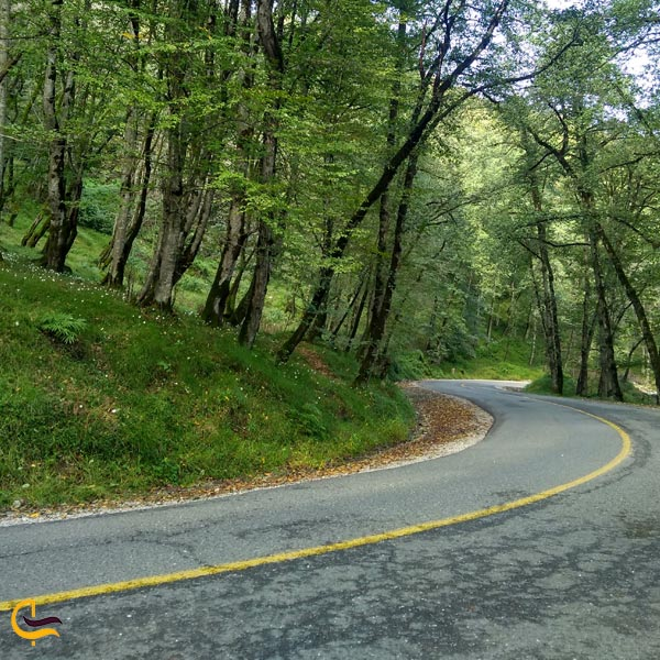 تصویری از جاده جنگل دالخانی
