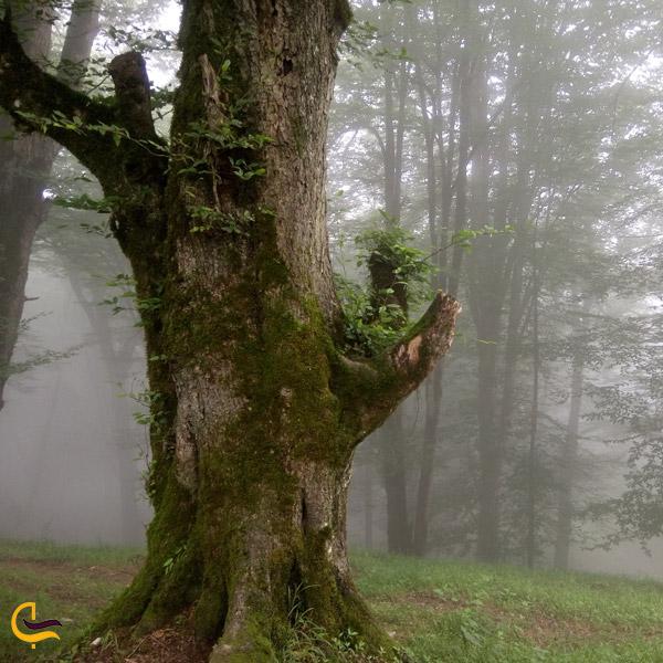 تصویری از طبیعت سرسبز و تمیز جنگل دالخانی