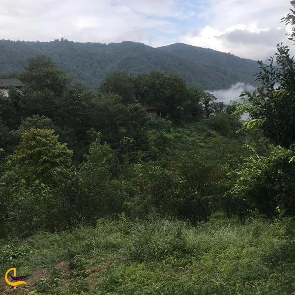 تصویری از طبیعت طبیعت سرسبز و تمیز جنگل دالخانی