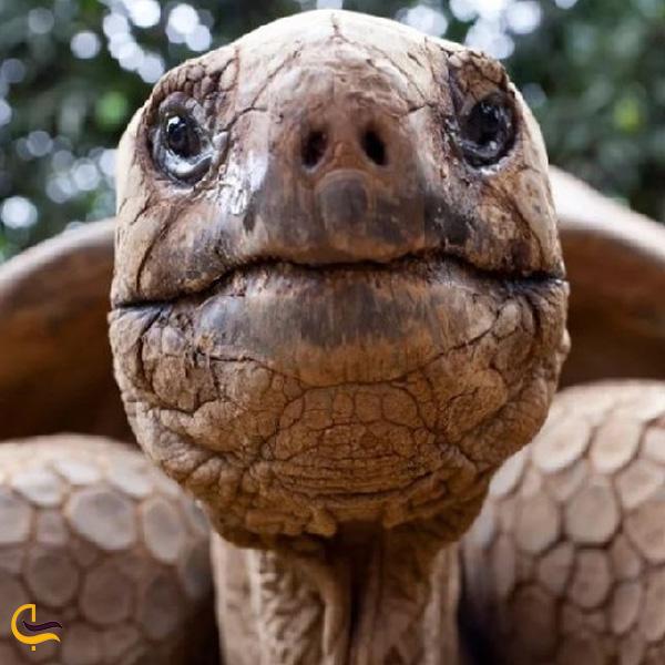 تصویری از لاکپشت