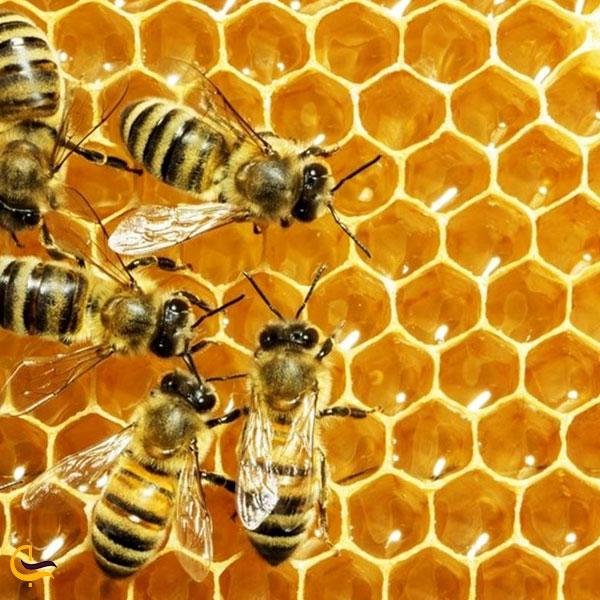 تصویری از زنبور عسل