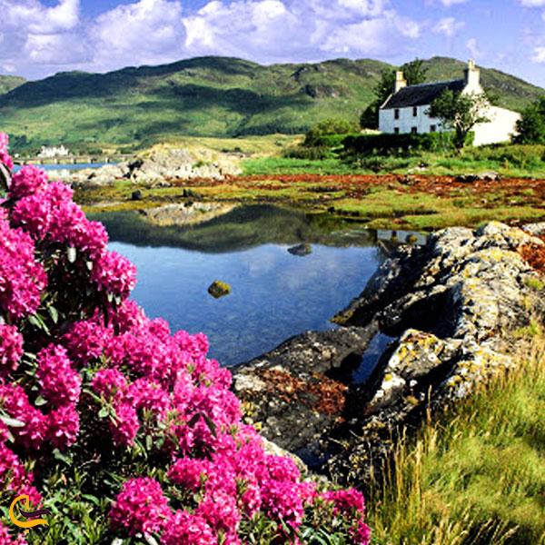 تصویری از پوشش گیاهی در طبیعت دریاچه کوه گل