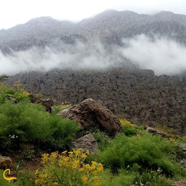 تصویری از طبیعت سرسبز دریاچه کوه گل