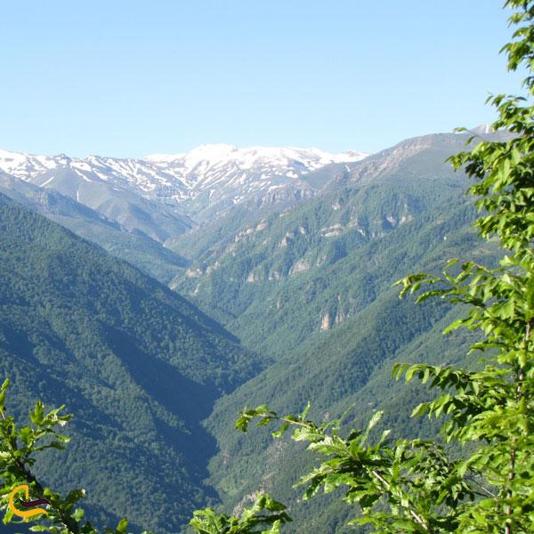 تصویری از طبیعت سرسبز جنگل دالخانی