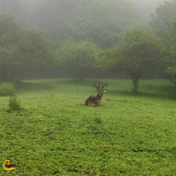 تصویری از پارک ملی ارسباران