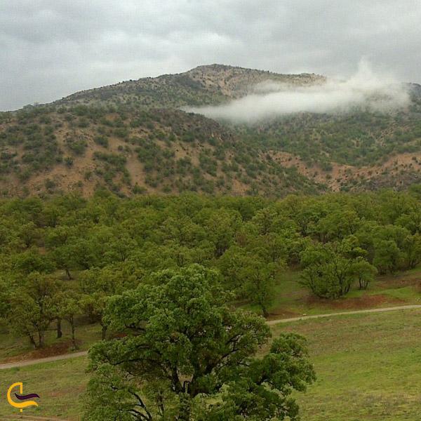 تصویری از طبیعت پارک جنگلی یاسوج